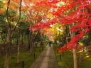 鹿王院 紅葉